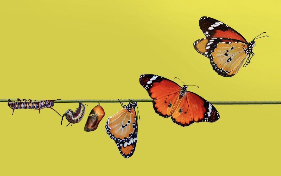 Wie Sie Krisen in Chancen verwandeln können
